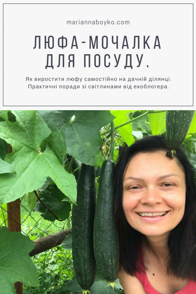 Як виростити люфу та зробити мочалку для кухні | Блог Маріанни Бойко